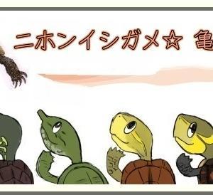 今年のチビ亀は・・・