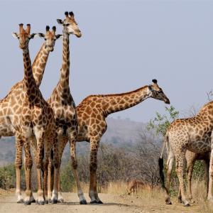 南アフリカランドでサヤ取り スプレッド回収に時間が掛かりすぎる!