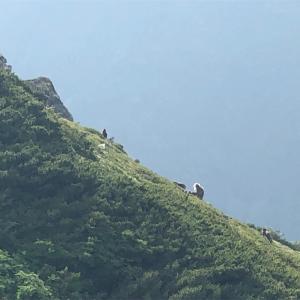 【登山】北岳⑦ 日本2位の最高峰 ニホンザル編