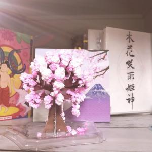 魔法のさくら!おうちで花見♪Magic桜を咲かせてみたよ