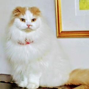 私の自己啓発マンガ。『きょうの猫村さん』がテレビで実写化です。