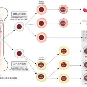 「池江璃花子 今伝えたいこと」  報道ステーションで感動と感謝 「血液のがん」の巻