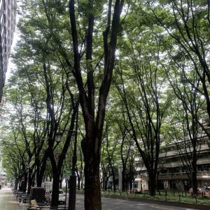 仙台で最高のマルゲリータに決定(石井ちゃんの採点)「ピッツェリア デ ナプレ」の巻