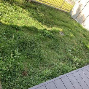 【DIY】庭の芝→雑草への生まれ変わり→草刈