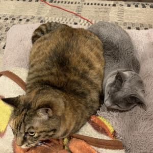 猫の2ショット(意外な組み合わせあり)