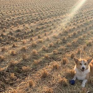 金色の野に降りたつべし
