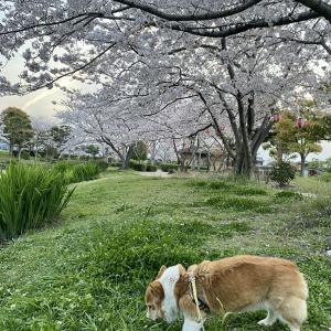 春のゆんゆん