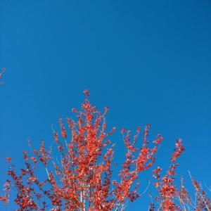 とっくに秋でした(;'∀')