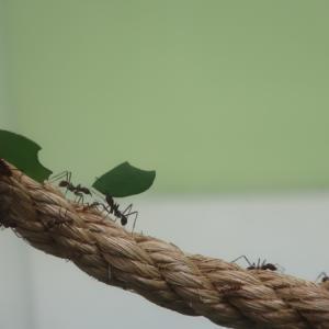 ゆっくりと終焉へと向かうハキリアリの巣を見に行ってきた at 多摩動物公園