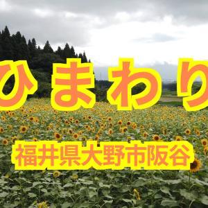 【SADA VLOG】2020年7月「ひまわり畑」福井県大野市阪谷