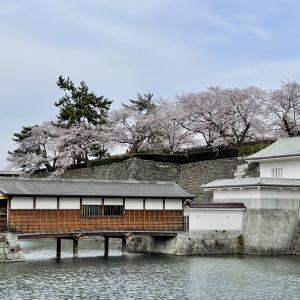 【福井】福井城跡の桜は見ごろ