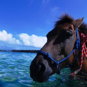 与那国島と与那国馬