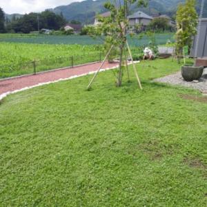 憧れの緑の絨毯