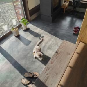 猫と暮らす(家の傷問題)