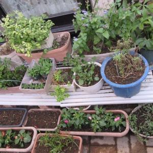 狭い庭でお日様を追いかけ、花の棚の材料♪サフィニア♪