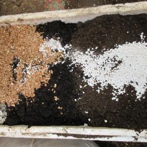 私流のビオラの植え替え用土作りと植え方!苦土石灰を使うわけ