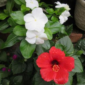 夏のお花から秋のお花へ♪お金は適度で健康が幸せと痛感!