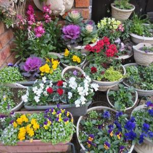 狭い庭なので花いっぱい!出番待ちの寄せ植えたち!鉢の断捨離♪
