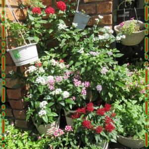 元気な花壇に!昨年の花壇と比較して花を増やす♪