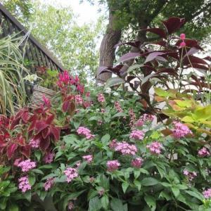 狭い庭なので我が家は花が咲いてます!花友達はまた癌が見つかる