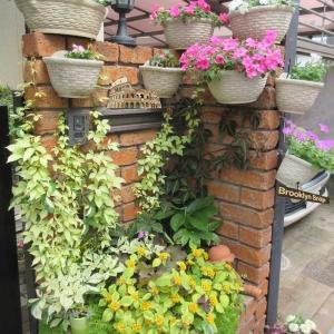 インパチェンスのレンガ花壇が美しい♪アジサイの日避け!