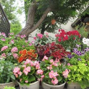 狭い庭はいつも花がいっぱい!見せる花壇の作り方♪