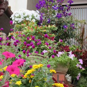 狭い庭の友達の花いっぱい生活♪見事!北海道からマーガレット