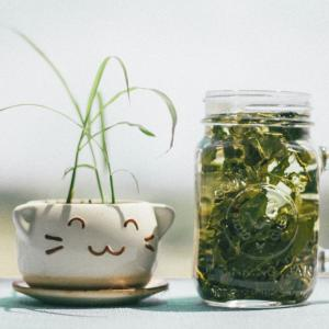 ペットボトルのお茶を選ぶコツ(食事管理パーソナルジム)