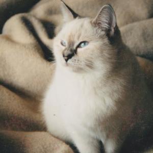猫家庭が猫を預かる時 成猫の導入の失敗例