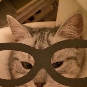 魔物?人類の敵?! 猫を飼う前に現実を知ろう!