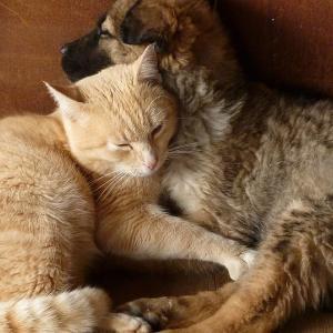 動物愛護先進国ドイツ・オーストリアの動物保護法とペット事情⓵ 「安易な飼い主」を作らない流通規制