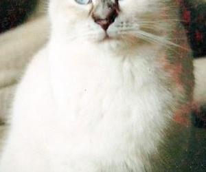 かるかんの命日・饒舌で優しかった3匹目の猫