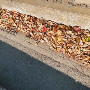 ひっつき虫と秋の終わり