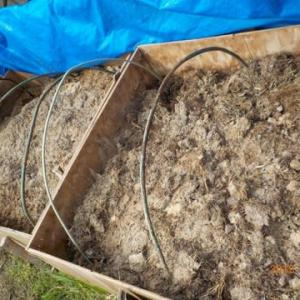 もみ殻堆肥を畑の畝に入れました