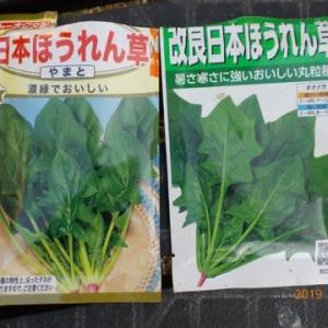 ホウレンソウの種を蒔きました