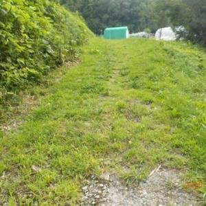 今年7回目 お盆前の草刈りをしました 暑い中、途中でトラブルが二つも