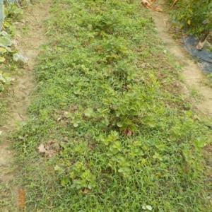 雑草抜きを手伝ってもらいました