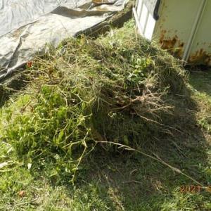 野菜くず・抜いた雑草を片付けました