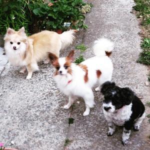 ペットショップへ行く前に〜犬の保護団体について