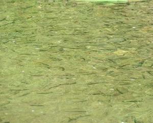 川での観察(石ってキレイ!)