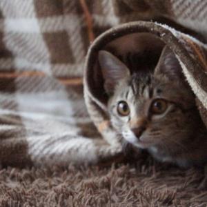 猫可物件を借りたのですが…