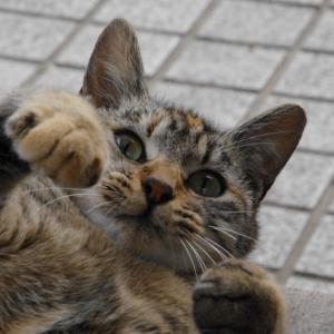 猫活、始めました!-猫活とは…-