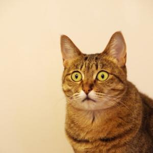 リアルタイム進行ではない猫活2
