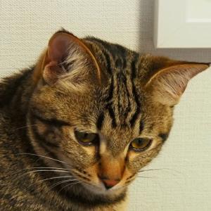 早々に、リアルタイム進行ではなくなった猫活…