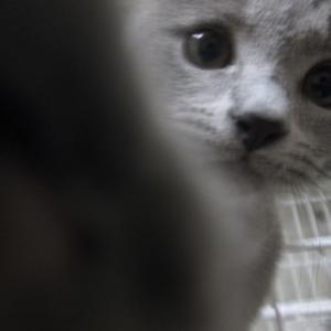 最近の猫との暮らし