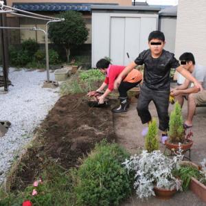 安穏芋の収穫 2019.10.14