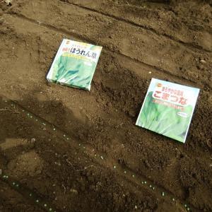 庭先菜園に種蒔き