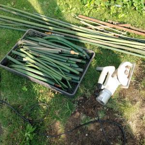 野菜の支柱廃棄準備