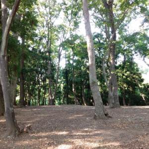 森林公園は爽やかな風が