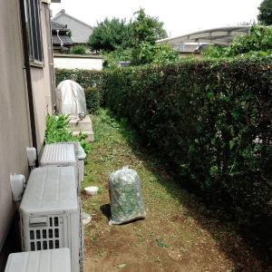 夏前の生け垣の刈り込み終了